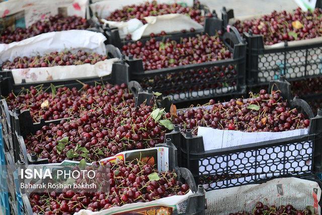 دغدغه صادرکنندگان تره بار در حال پیگیری است