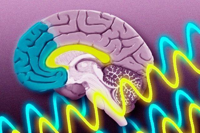 نقش دوپامین در واکنش به خطر