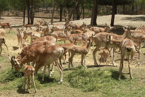 تهیه طرح ساماندهی مرکز نگهداری حیات وحش بوستان چیتگر