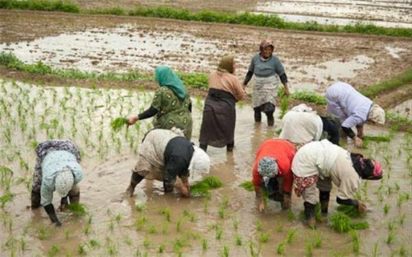 راه اندازی 250 روستا بازار تا انتها سال جاری