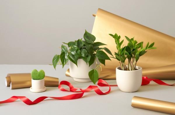 ده نمونه از برترین گیاهانی که برای هدیه دادن مناسب هستند!
